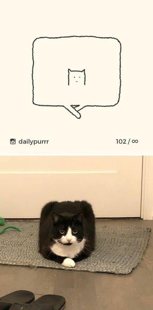 рисунки котов 1