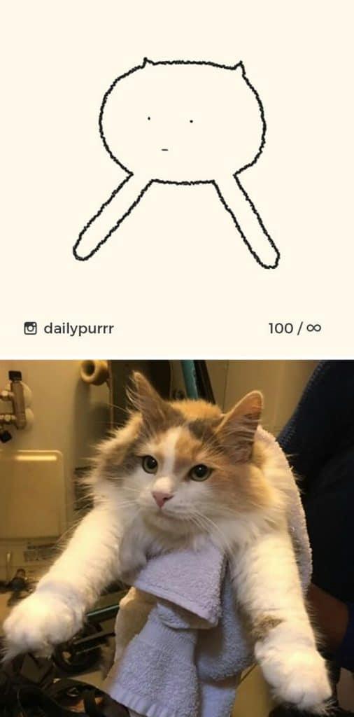 рисунки котов 12