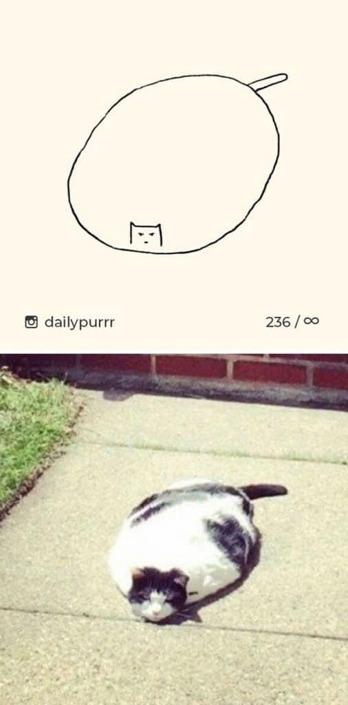 рисунки котов 11