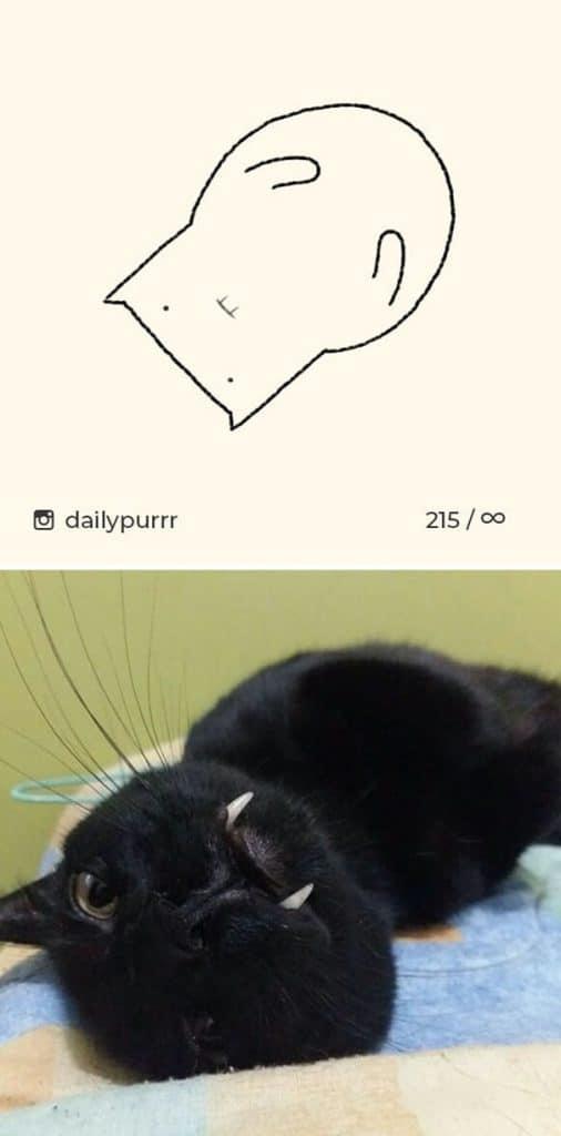 рисунки котов 9