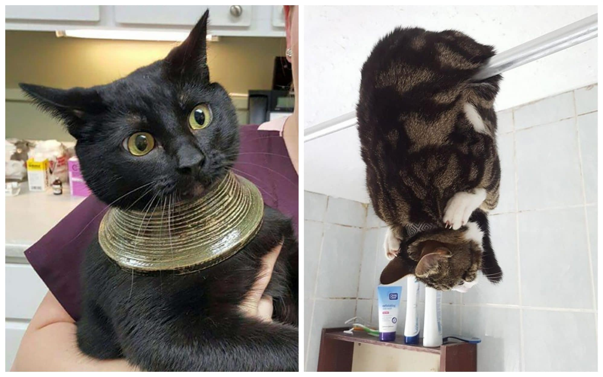 Fatal Error! 19 котов, которые забыли, как ими быть!