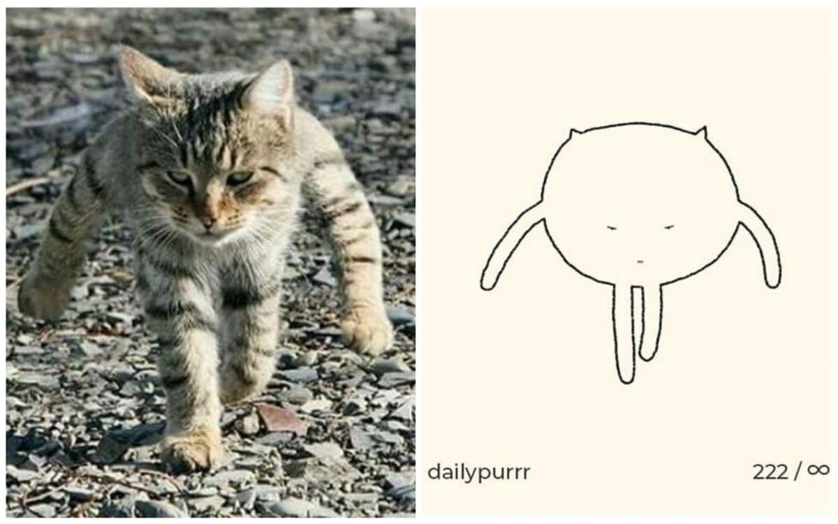 18+ примитивных рисунков котов, над которыми не грех посмеяться!