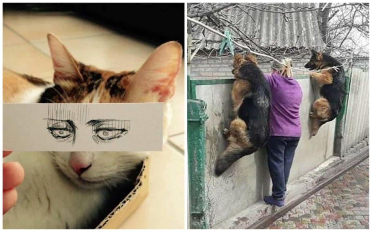 19 ярких доказательств того, что миром правят смешные животные! Часть II