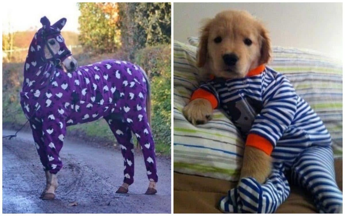 Смотреть на животных в пижамах - наше новое любимое занятие!