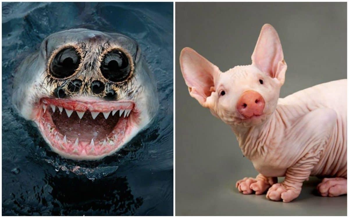 """20 """"новых"""" животных, созданных буйной фантазией фотошоперов!"""