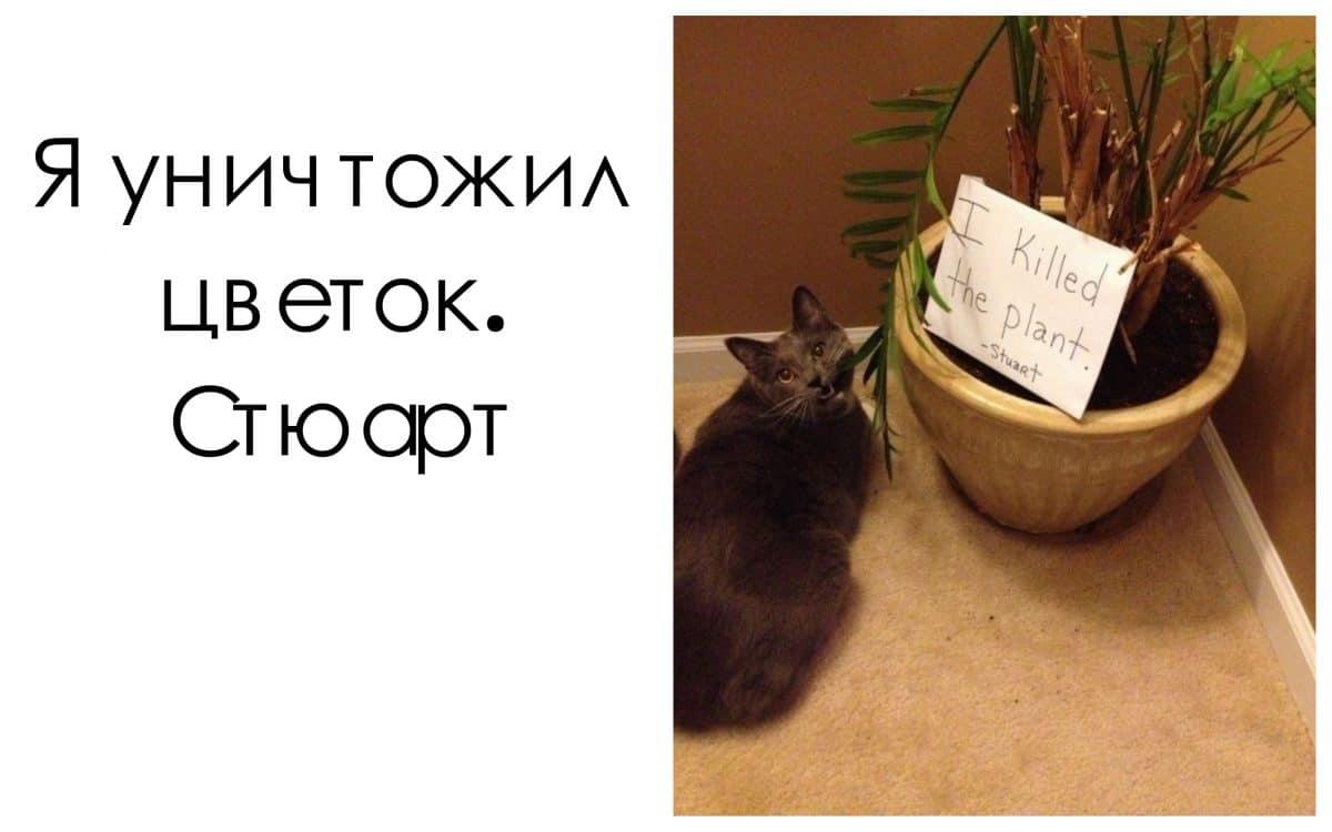 """13 котов, пойманных на месте """"преступления""""!"""