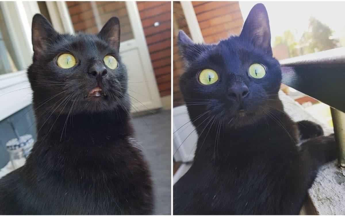 Черный кот впервые вышел на балкон и его реакция заставит тебя посмеяться!