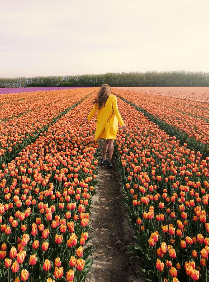 В Нидерландах зацвели 7 миллионов тюльпанов! Сказка, которую стоит увидеть! 13