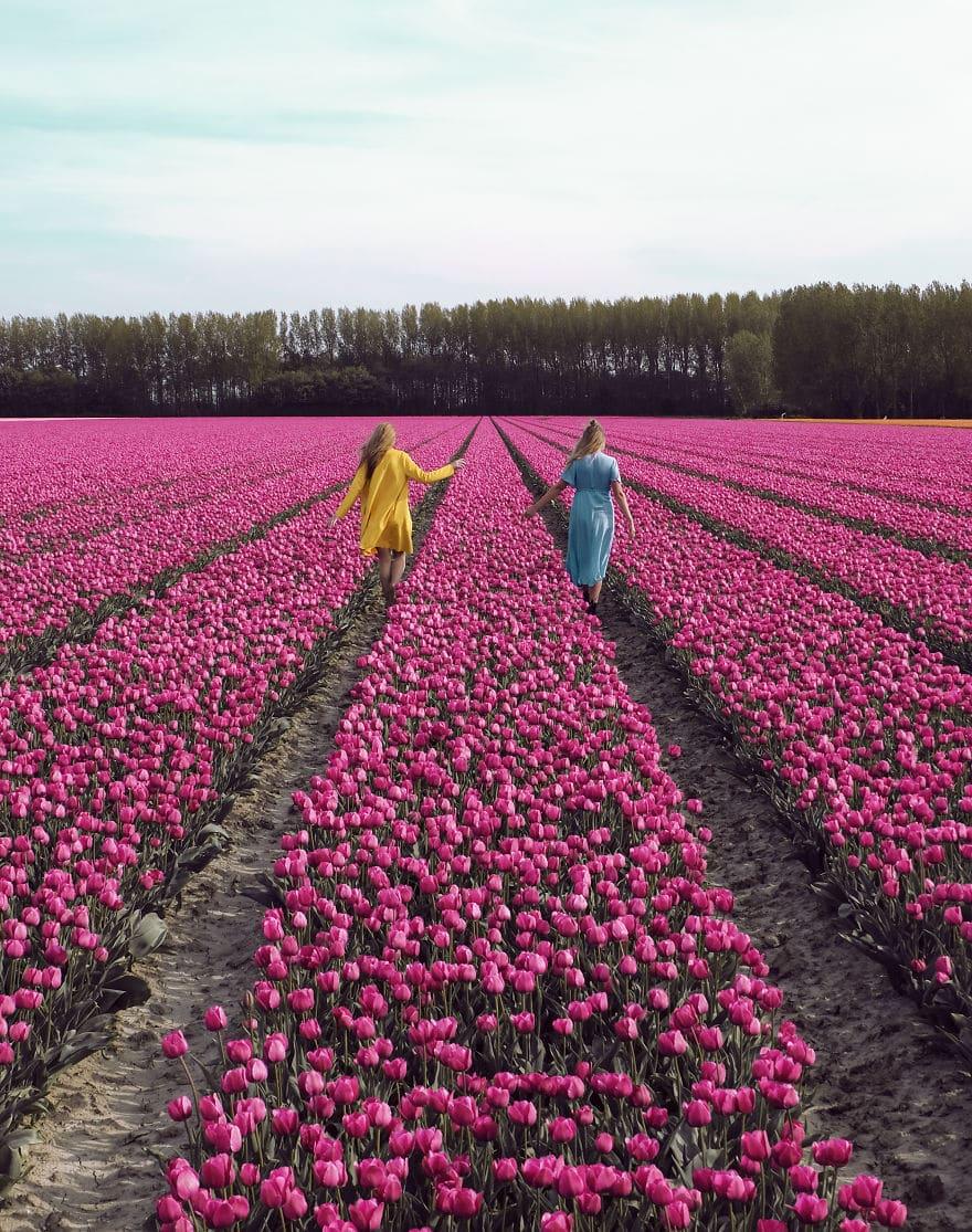 В Нидерландах зацвели 7 миллионов тюльпанов! Сказка, которую стоит увидеть! 2