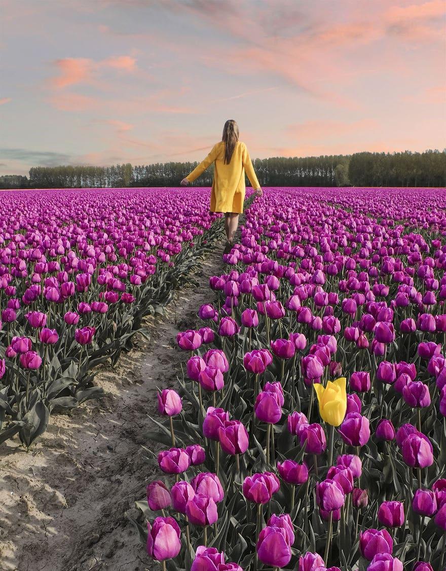 В Нидерландах зацвели 7 миллионов тюльпанов! Сказка, которую стоит увидеть! 12
