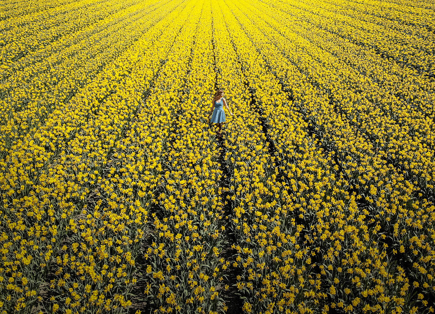 В Нидерландах зацвели 7 миллионов тюльпанов! Сказка, которую стоит увидеть! 8