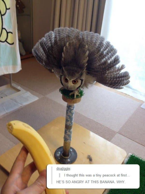 смешные животные 9