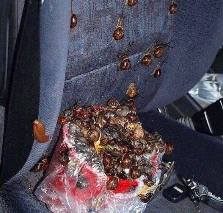 улитки в машине