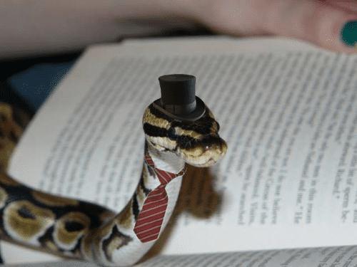 20 милых снимков змей в головных уборах! 7