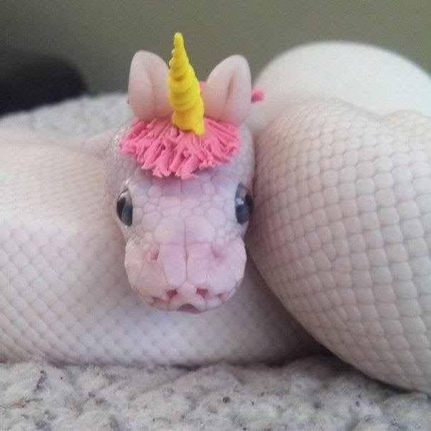20 милых снимков змей в головных уборах! 18