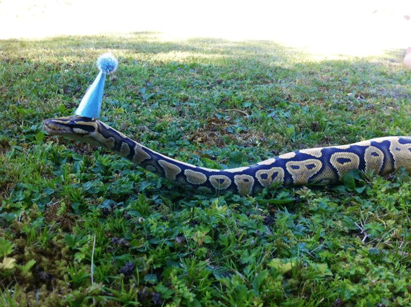 20 милых снимков змей в головных уборах! 11