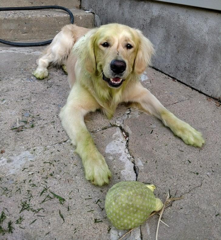 Владельцы домашних животных делятся самыми странными фото своих пушистых друзей! рис 10