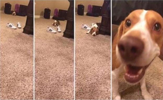 собака рис 2