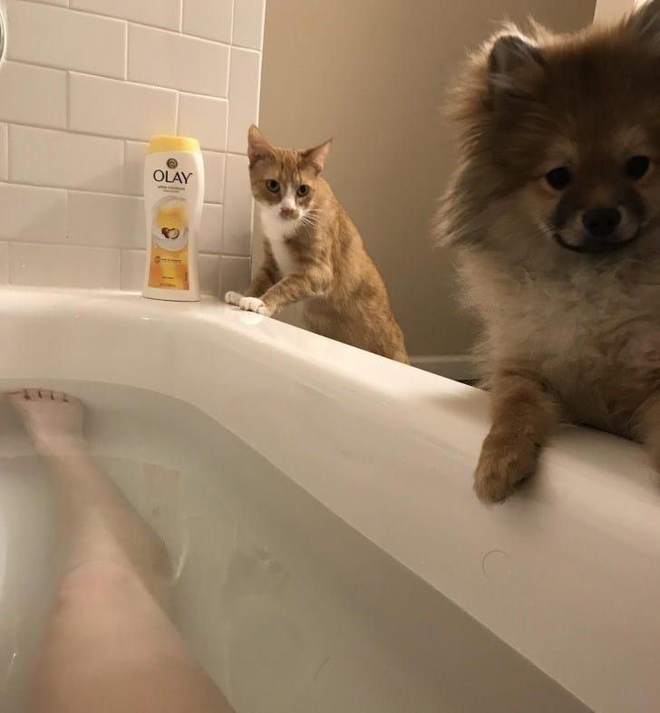 Владельцы домашних животных делятся самыми странными фото своих пушистых друзей! рис 3