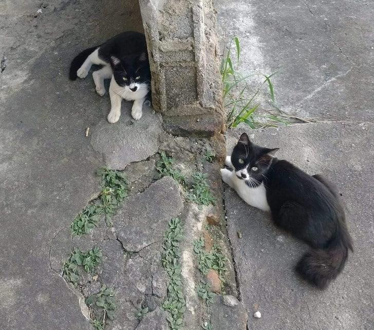 Владельцы домашних животных делятся самыми странными фото своих пушистых друзей! рис 5