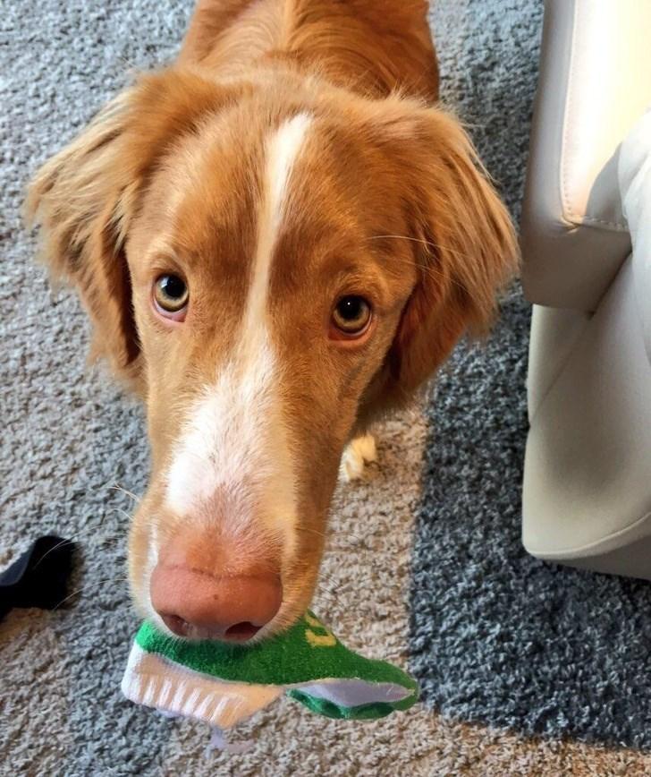 Владельцы домашних животных делятся самыми странными фото своих пушистых друзей! рис 6