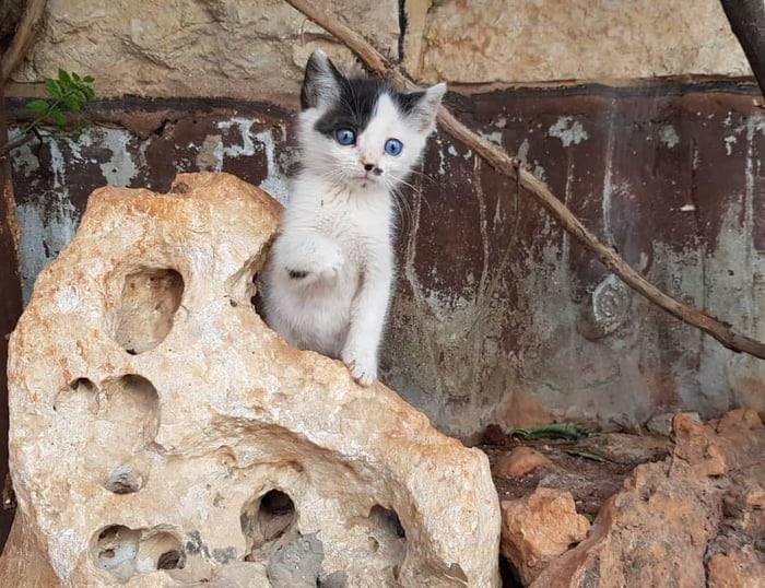 котенок Джуниор
