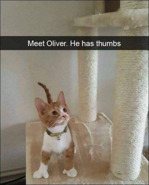 Смешные коты снова на позициях! 17 свежих фото