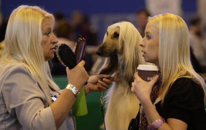 блондинки с собакой