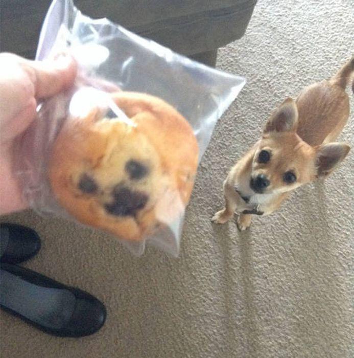 собака и булочка