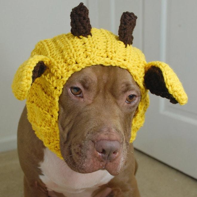 собака в желтой шапке