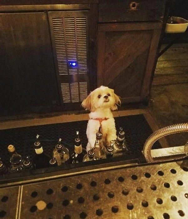 собака за стойкой
