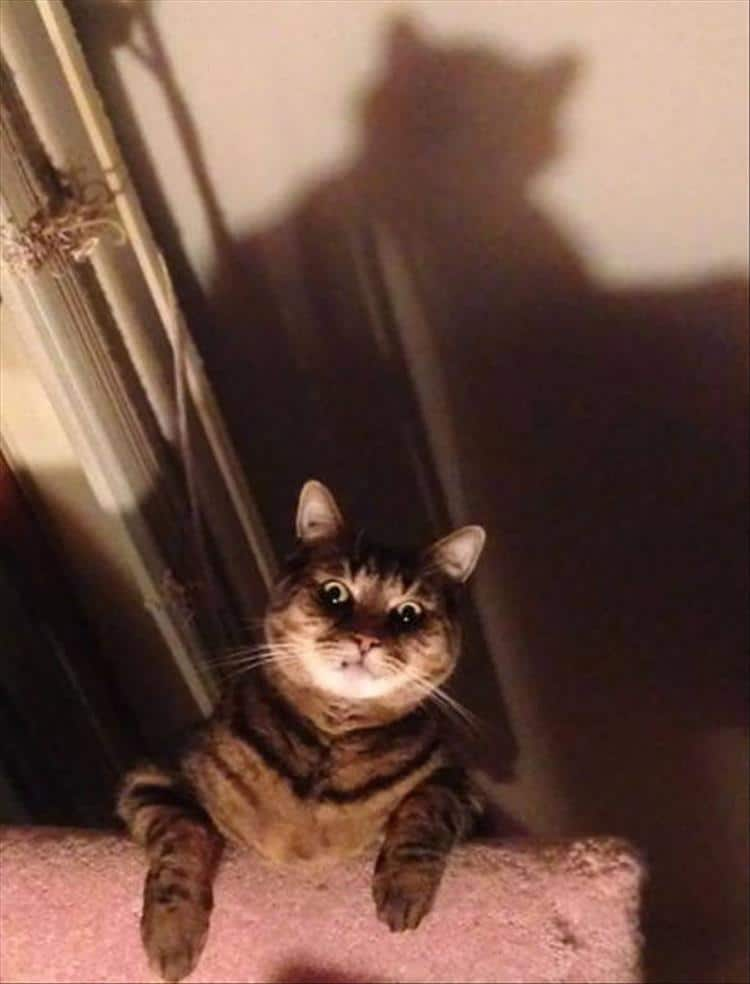 кошки чистое зло2