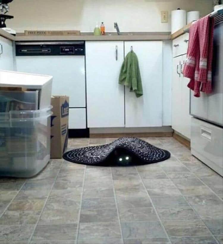кошки чистое зло1