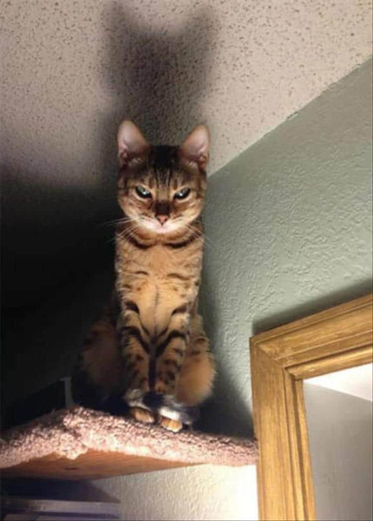 кошки чистое зло5