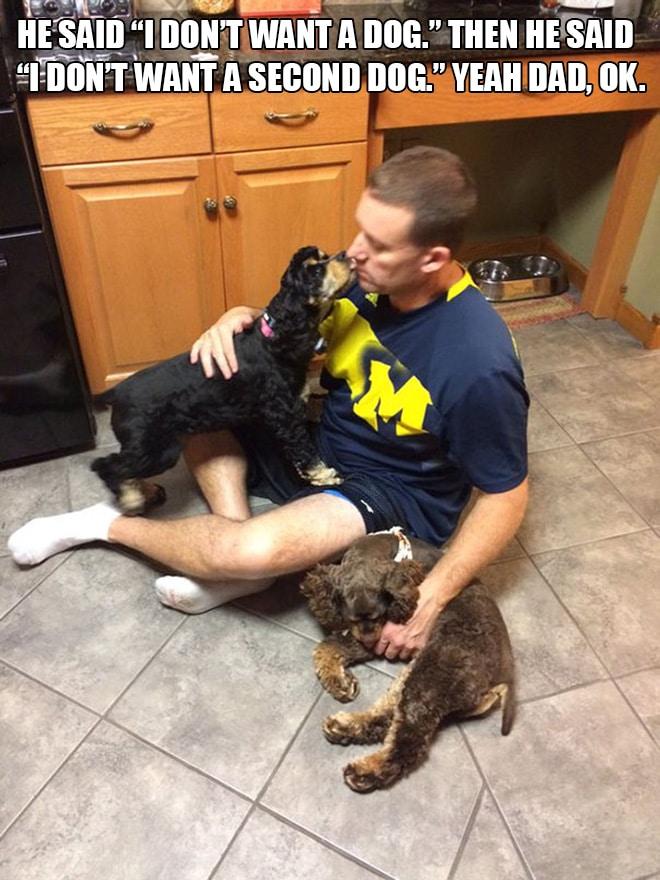 мужчина с собаками рис 2