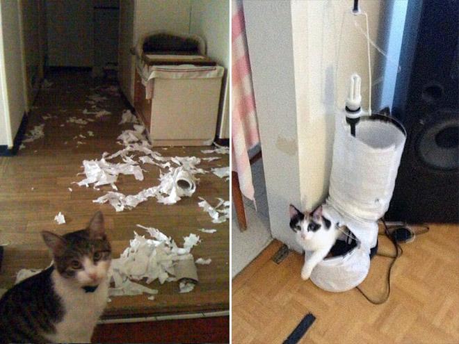 коты и бумага