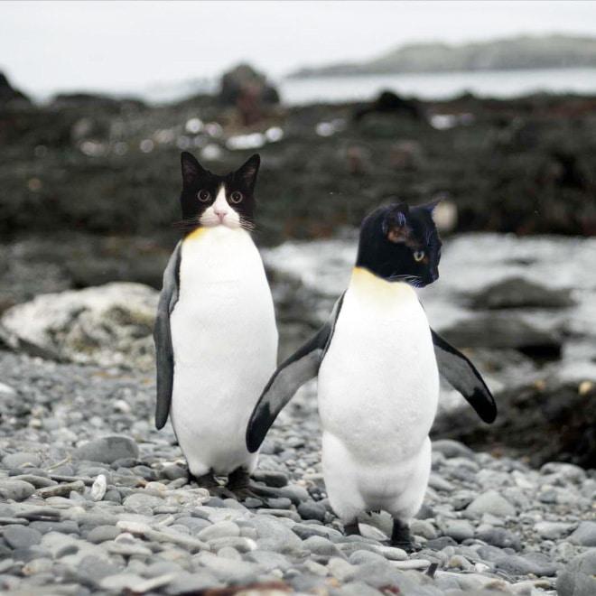 коты пингвины рис 2