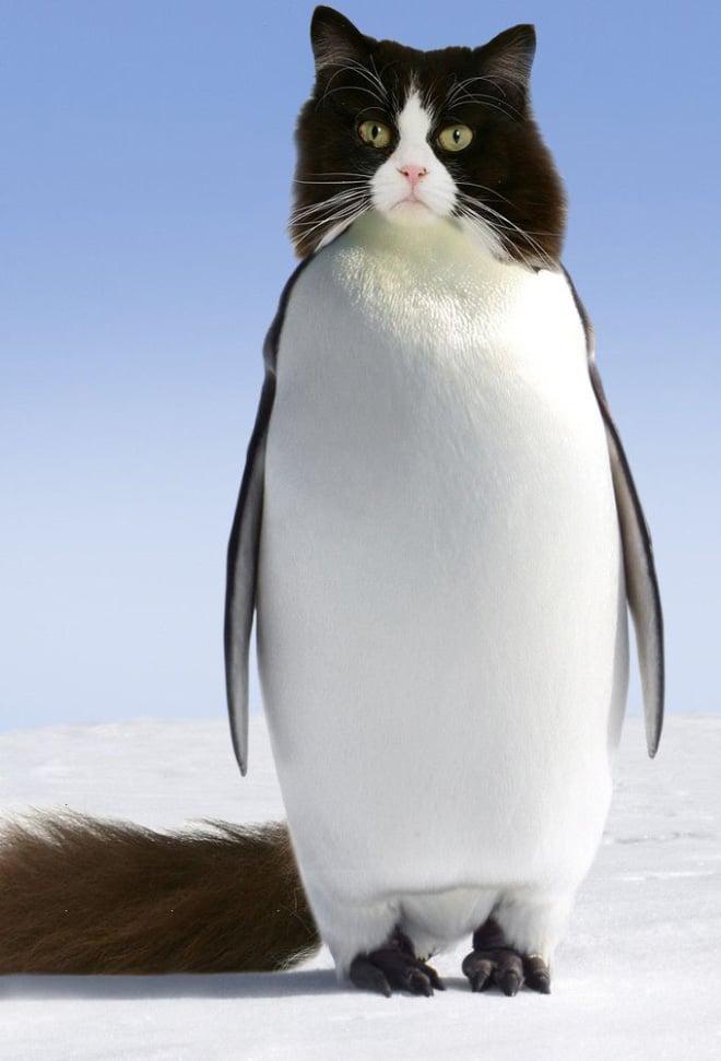 кот пингвин