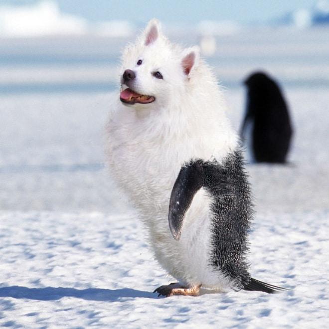 собака пингвин