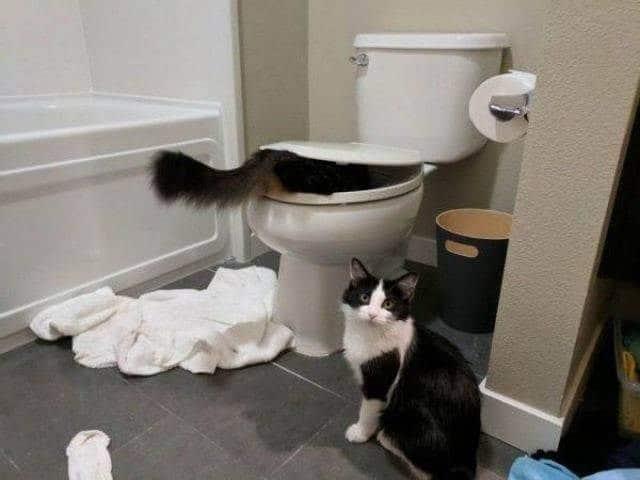 кошки в ванной