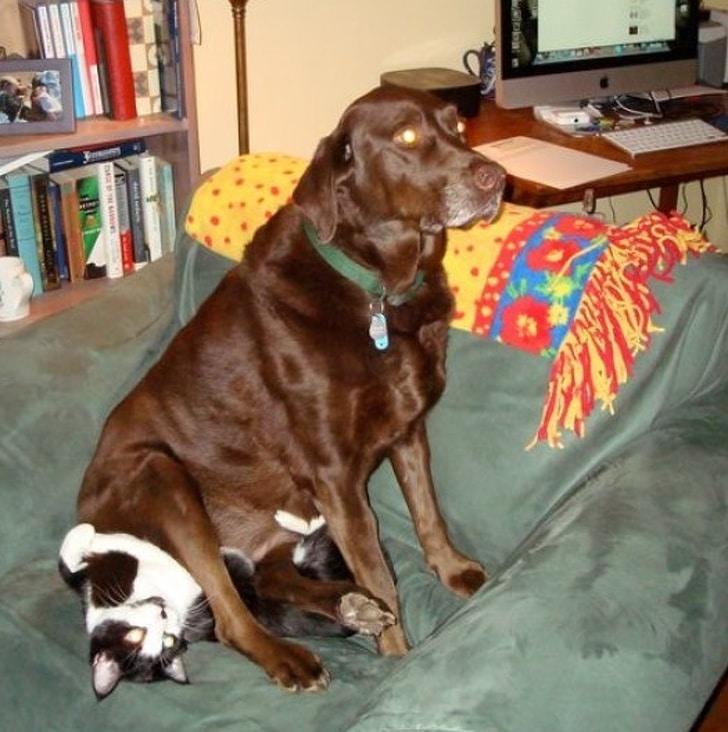 собака сидит на кошке