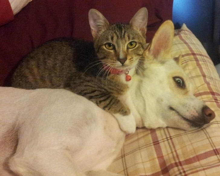 кот и собака рис 2