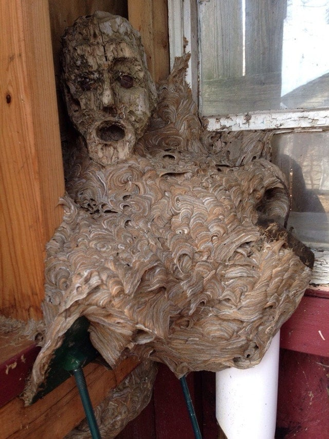 гнездо ос