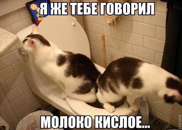 мемы с котами рис 2