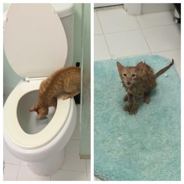 рыжий кот на унитазе