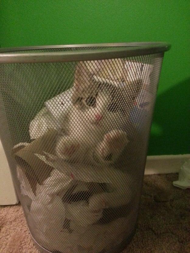 котенок в мусорном ведре