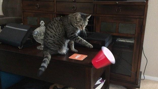кот опрокидывает стакан