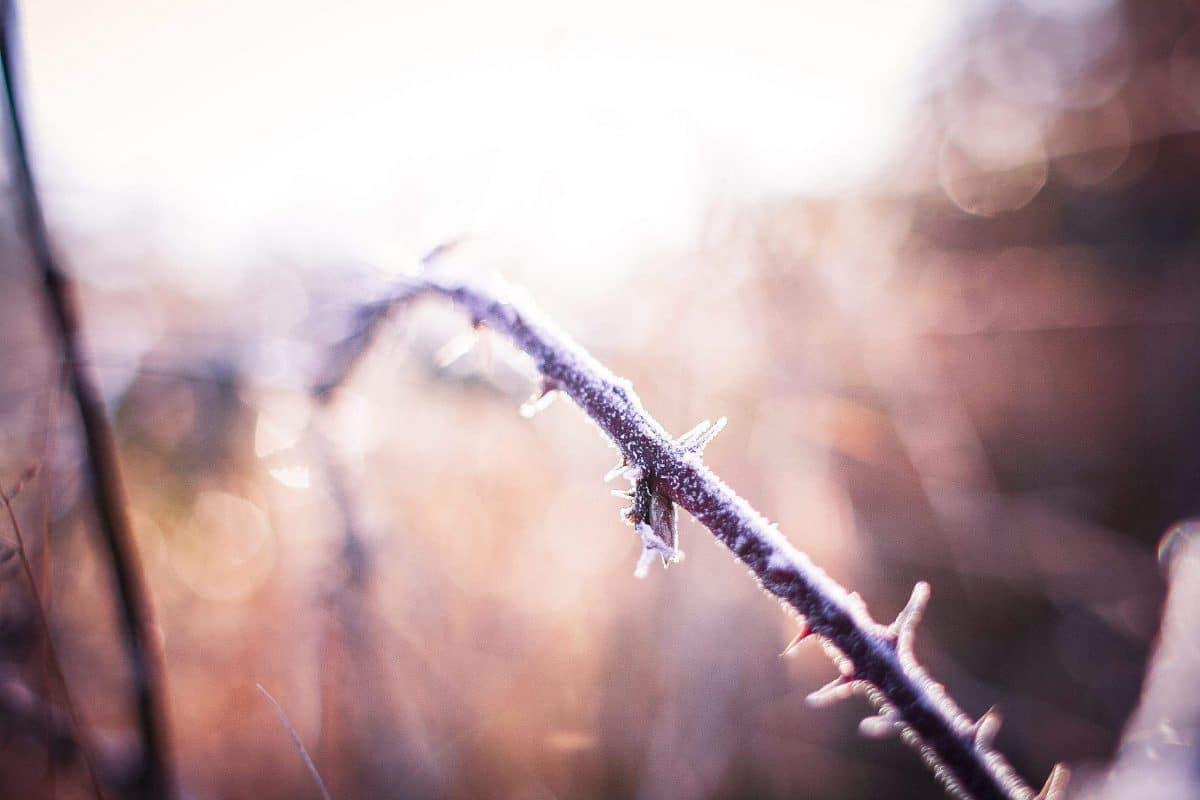 9 чудесных фото, напоминающих о прелестях зимы рис 3