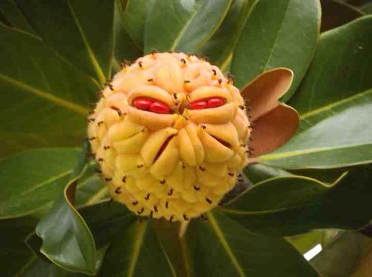 цветок со злобным лицом