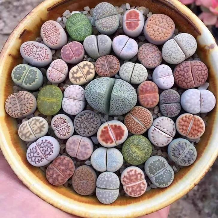 живые растения в форме камня